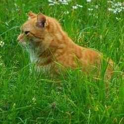 Психология поведения кошки