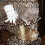 Почему кошки метят