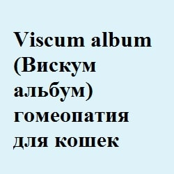 Viscum album