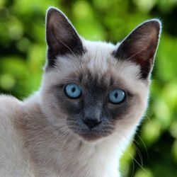 голубыми глазами