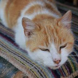 Кошка спит, поджав