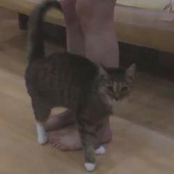 Почему кошка трется