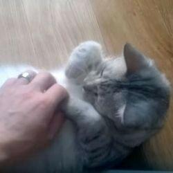 Кошка переворачивается