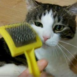 Линька у кошек как правильно выбрать расческу