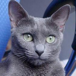 Соломон спасатель тапочек, самые знаменитые коты
