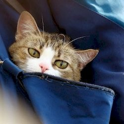Стерилизация кошек за и против, плюсы и минусы