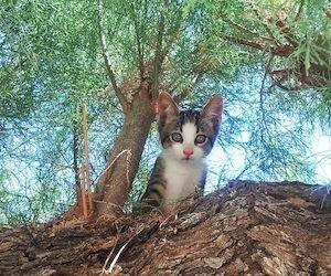 Были ли вы котом в прошлой жизни, шуточный тест (юмор)