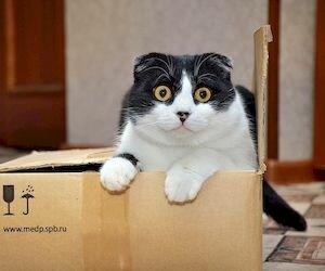 Как я взвешивал кота