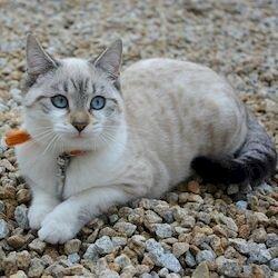 Ириска – певунья, знаменитые кошки