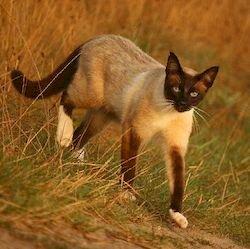 Пета беглянка, из жизни кошек