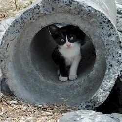 Материнский инстинкт, как я спасал котенка