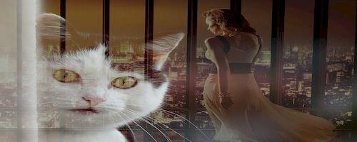 О чем думает кот юмор о котах и кошках